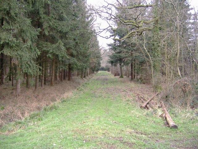 Braydon Wood