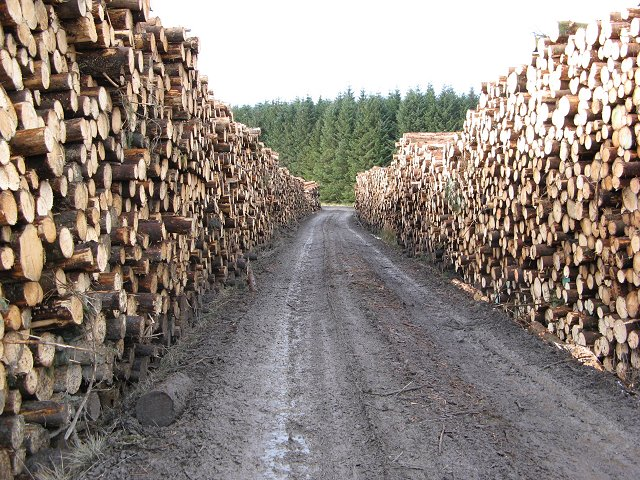 Logging and road