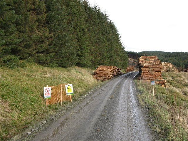 Log piles, Sauchie Law