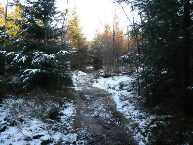 Forty Acre Wood - A Snowy Footpath