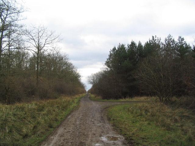 Track through Fermyn Woods