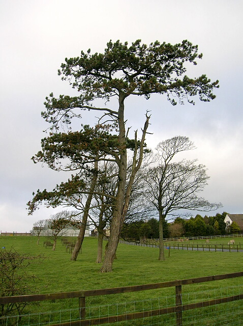 Trees at  High Wexford