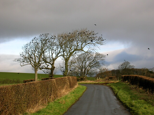 Bird Roost Near Symington