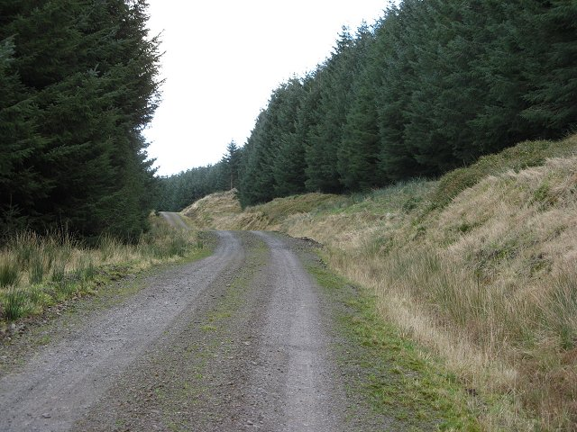 Forest road, Winghope Knowe