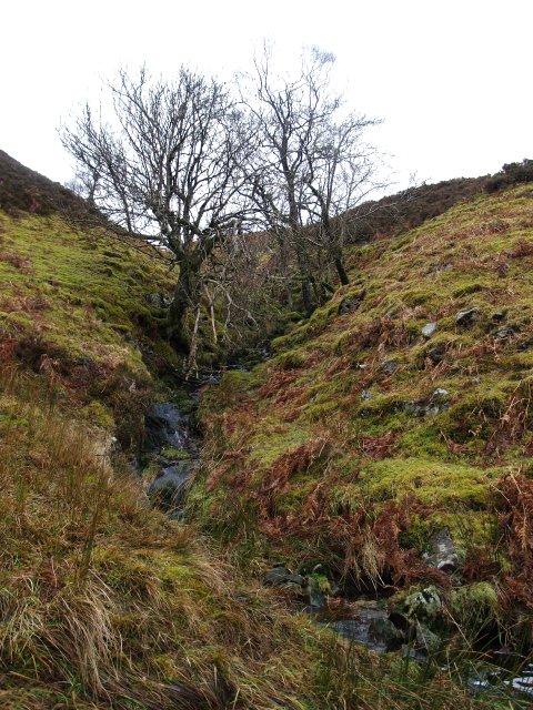 Small stream, North Grain.