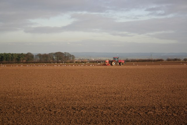 Seed drilling at Newlands