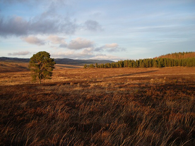 Moorland, late afternoon sun