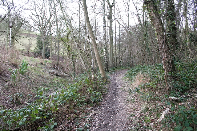 Path Through Lambridge Hill Wood