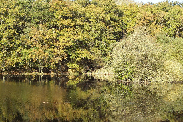 Reflections at Eyeworth Pond