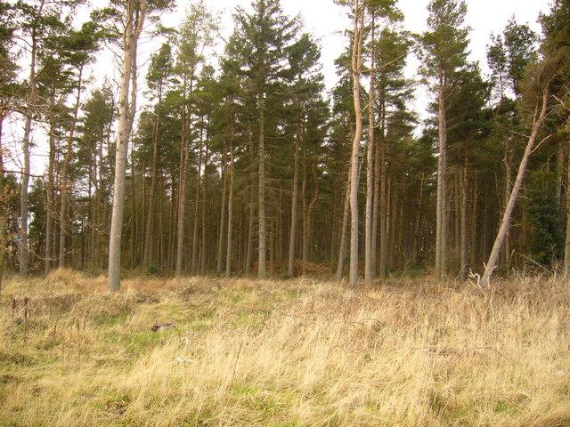 Standagainstall Plantation, Long Edge