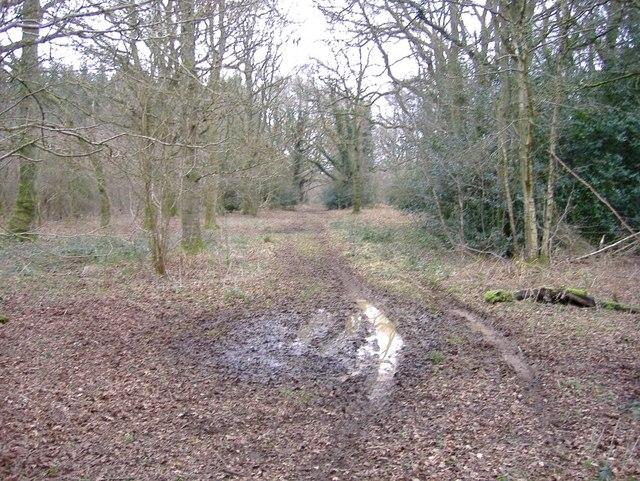Flisteridge Wood