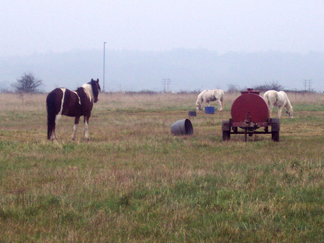 Tethered Ponies near Odstock Hospital