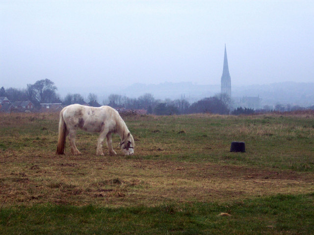 Tethered Pony with Salisbury Cathedral Spire in the Distance
