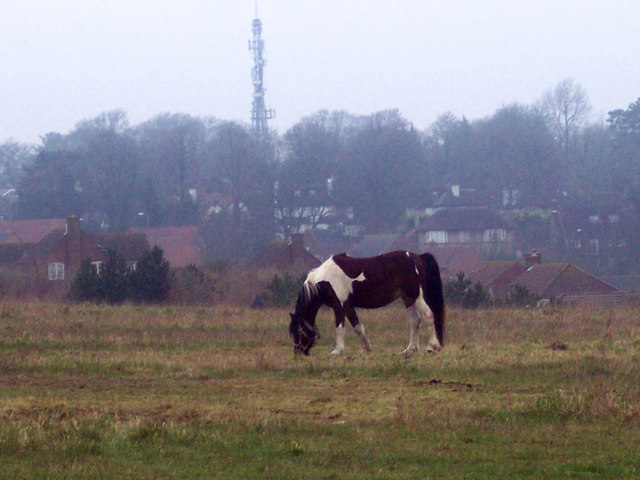 Tethered skewbald pony with Harnham TV Mast in the distance