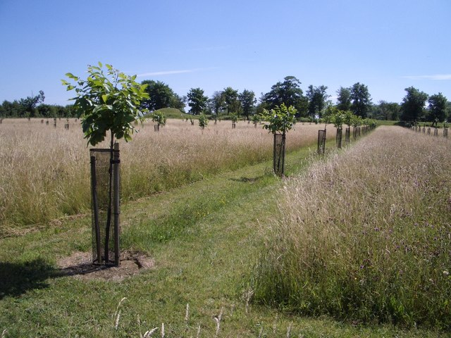Orchard Trees at Lyveden New Bield