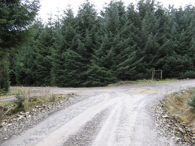 Road junction, Buccleuch Forest