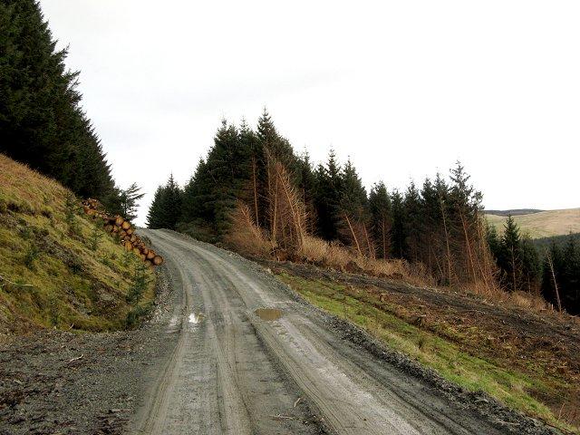 Felled area, Hazel Rig