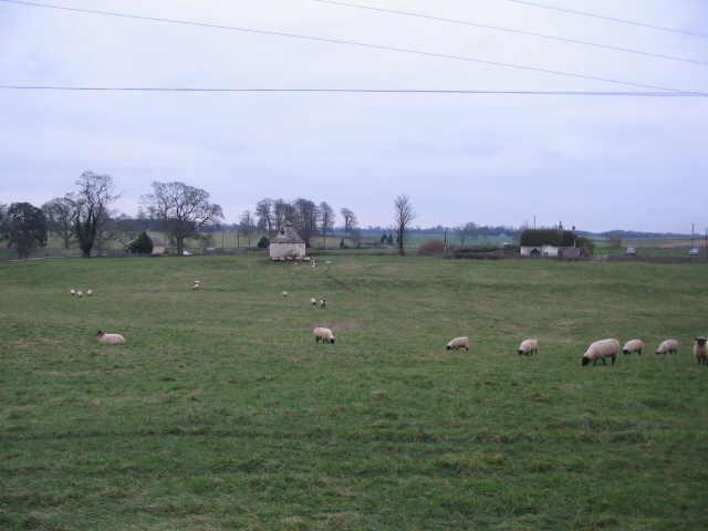 Sheep grazing at Little Badminton