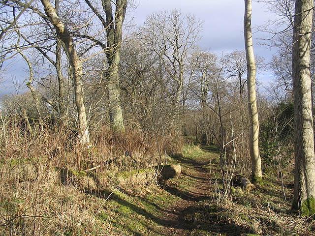 Langlee Woodlands