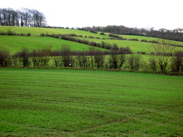 Fields Near Muirmill