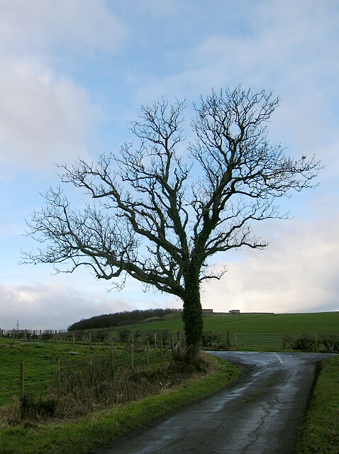 Tree At Junction Near Dundonald
