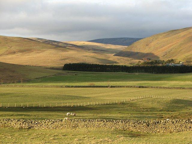 Sheep, Eldinhope