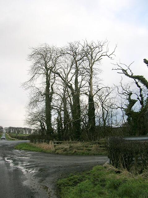 Trees at Crooks