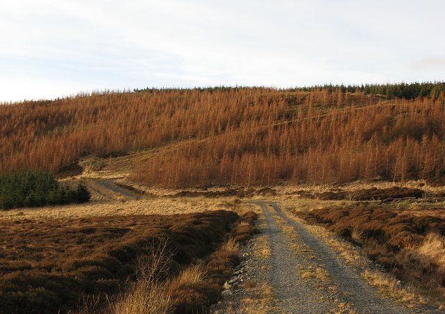 New plantings on Glenlude Hill