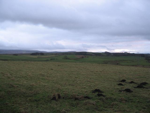 Dusk Mole Hills