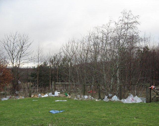 Windblown litter, Oakbank Park