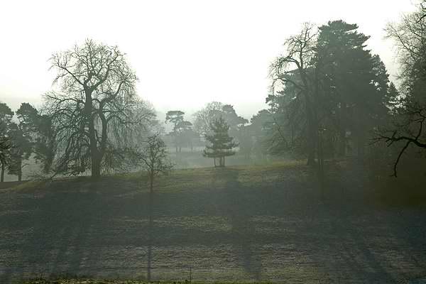 Mist in Millichope Park