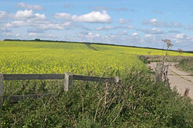 Fields above Penlee