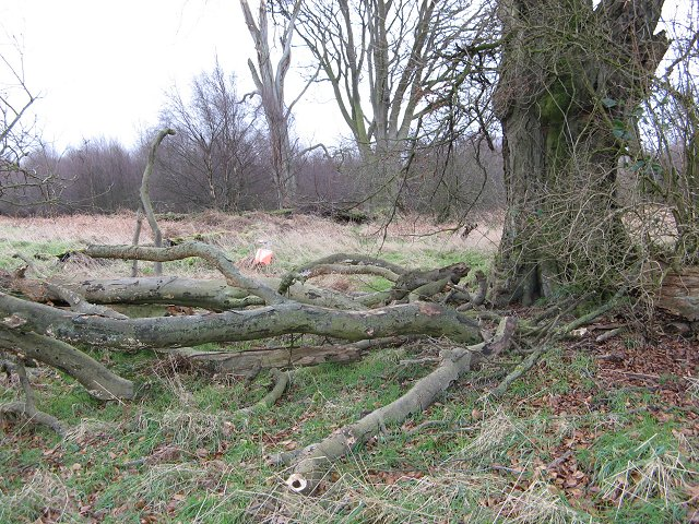 Shallow reentrant, Calder Wood