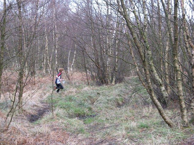 Calder Wood