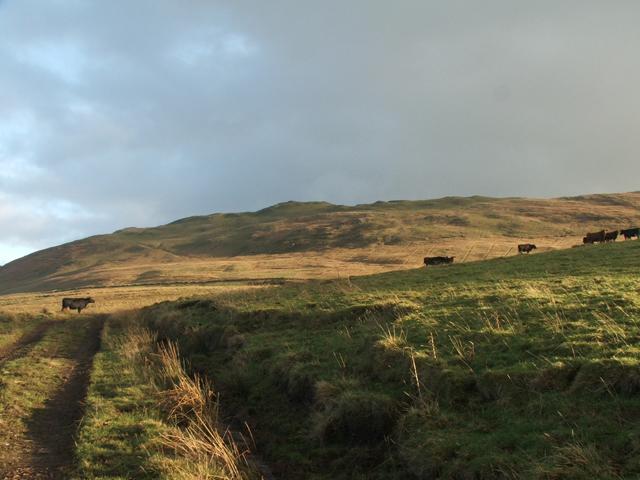 Grey Hill
