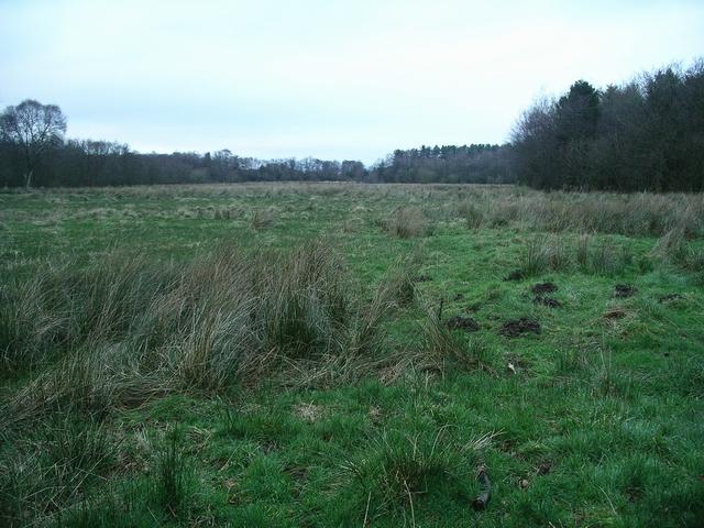 Marshland, Castle Loch