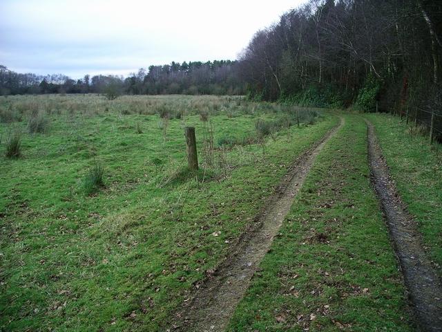 Track beside Kirkhirst Plantation
