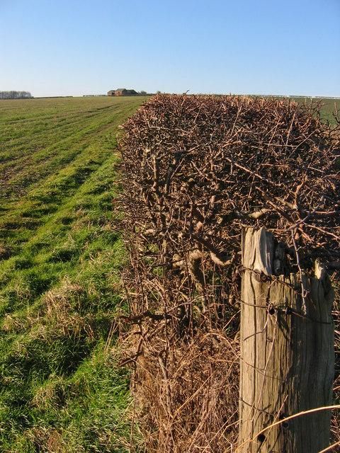 Boythorpe Farmland