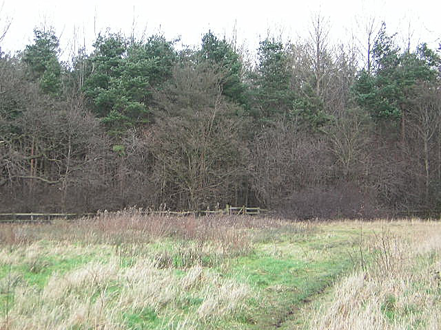Parsonage Wood