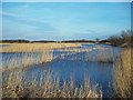 TA0523 : Reedbed by David Wright