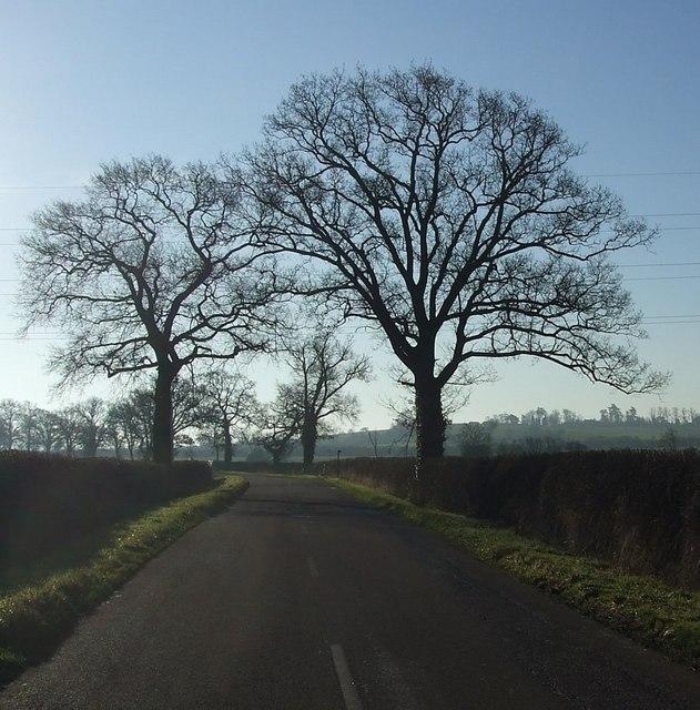 Trees south of Ledburn