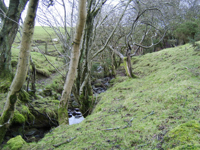 Stream and surrounding woodland