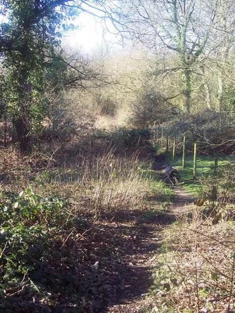 Woodland Path near Alderholt