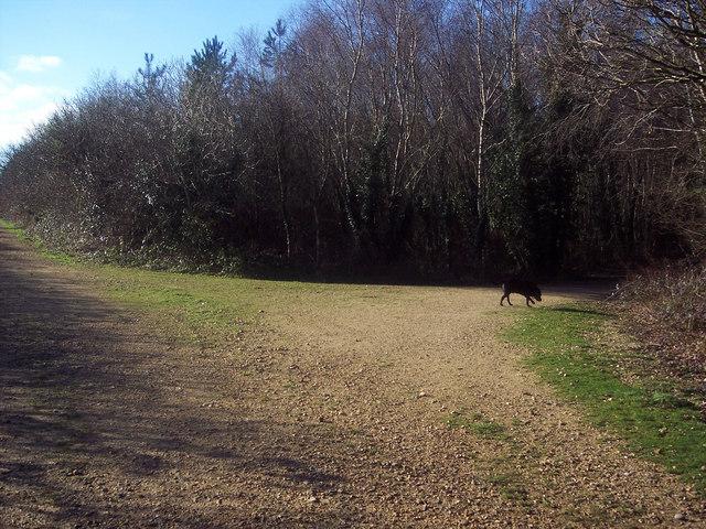 Junction of Forestry Tracks nr Alderholt