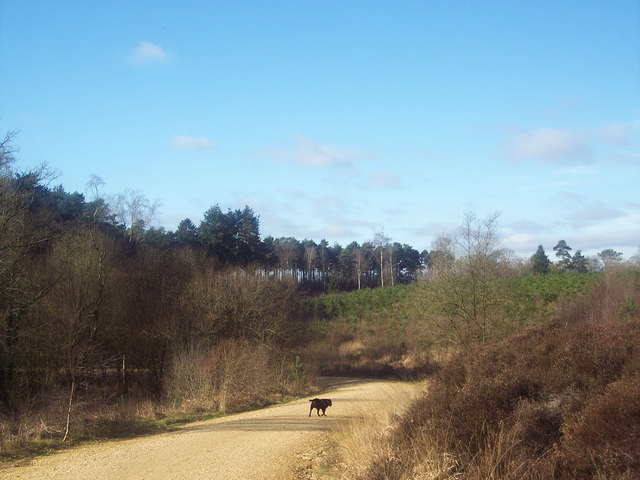 Mixed Forestry in Ringwood Forest