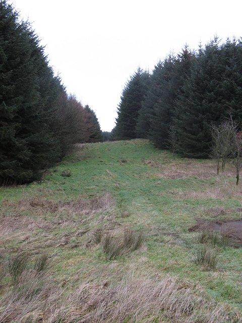 Forest, near Muldron