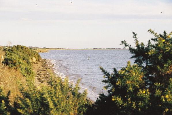 Shoreline near Lonemore