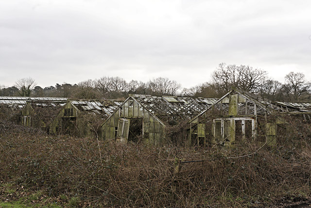 Derelict glasshouses off Wangfield Lane