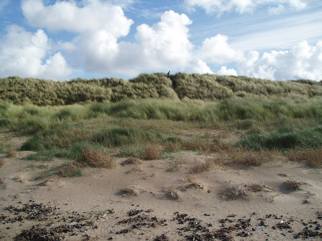 Whiteford Burrows