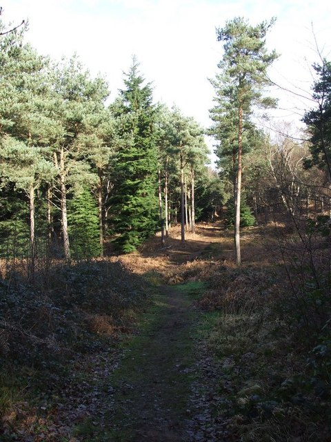 Looking into King's Wood